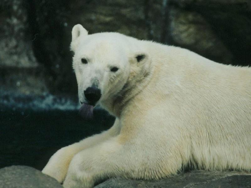 熊落寞动物背影