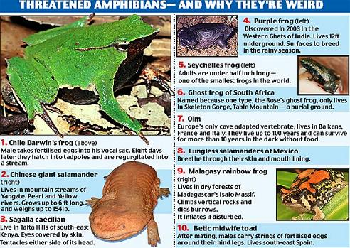 全球十大最奇特濒危两栖动物-科教台-中国网络电视台