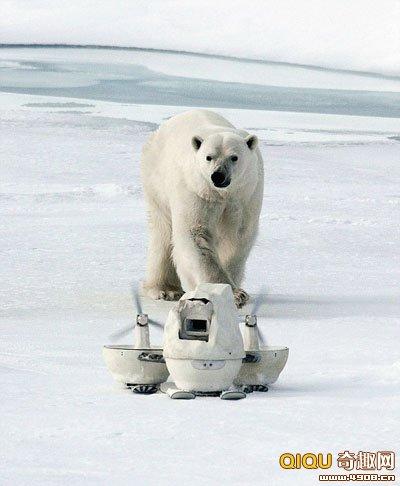北极气候特点(共10篇)