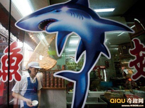 [多图]血腥鱼翅交易曝光:牛鲨被残忍割鳍