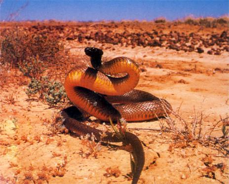 海陆空三种最致命的蛇:树蛇能空中滑行近百米-科教台