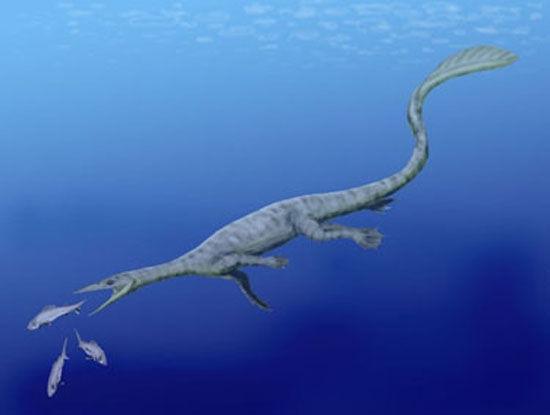 阿拉斯加的科学家们日前找到一种罕见史前海洋爬行动物的骨骼化石,这