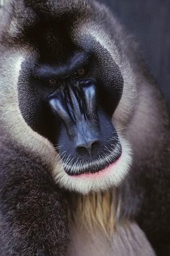 """""""干细胞动物园""""有望拯救地球濒危灭绝物种-科教台"""