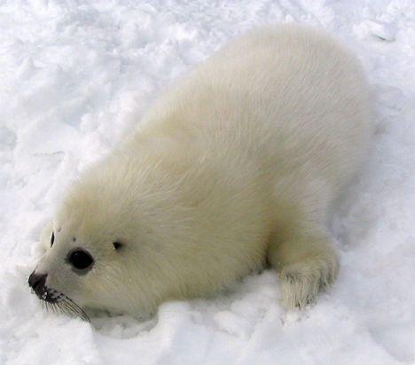 北极动物识别图片
