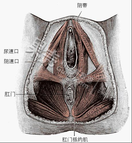 图片也要挨一刀,阴侧切术残害顺产?-科教产妇脱女生袜子图片