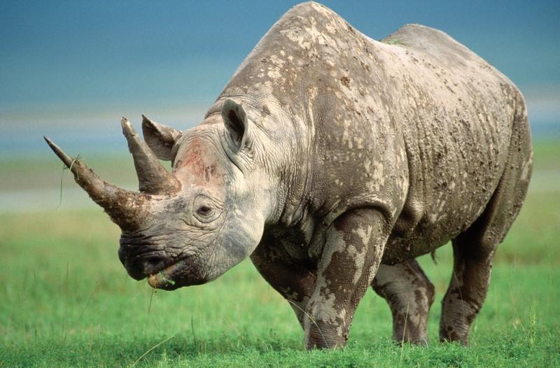 灭绝动物大全图片