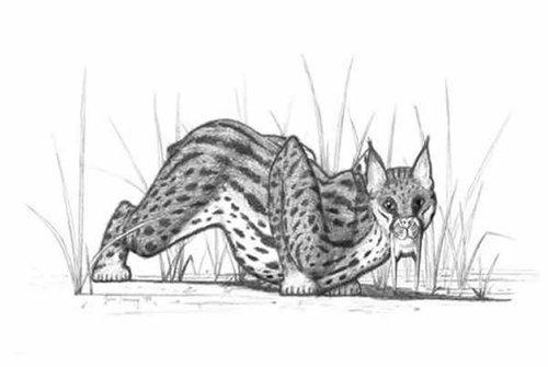 他具强力牙齿的猛兽可能曾经还拥有强健有力的胳膊来帮助它们狩猎.