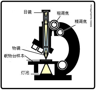 微观世界!让我们做一个显微镜吧