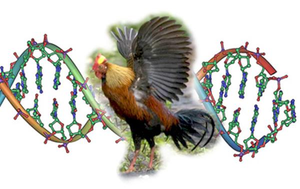 研究发现β角蛋白进化是支持鸟类飞行的重要因素