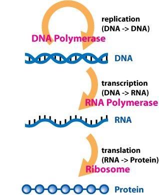 新技术揭示人转录组中存在大量RNA编辑
