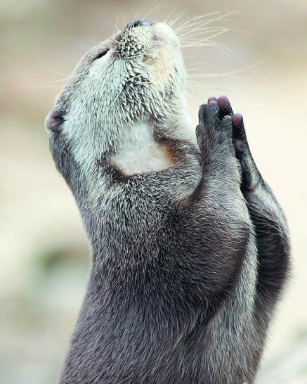 """照片中双爪合十,仰起头闭上眼睛,好像在祈祷:""""上帝,请赐给我一条鱼吧!"""""""