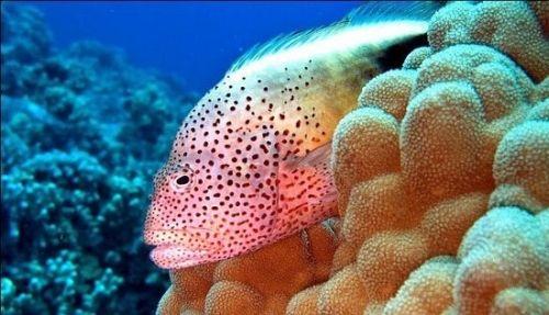 亚太十大美丽海底世界