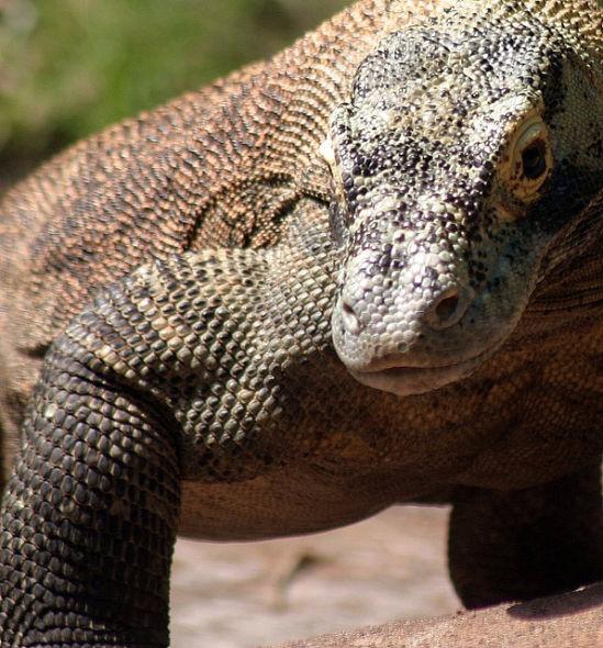 地球最大五种爬行动物:咸水鳄体长超6米(组图)-科教台