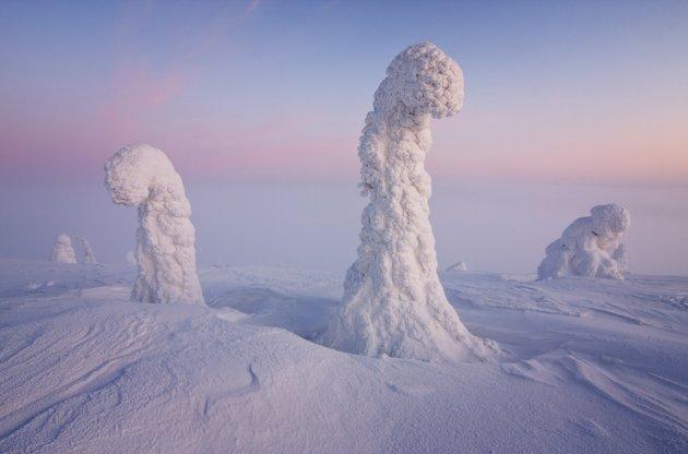北极圈银装素裹奇景:树林完全被冰雪覆盖