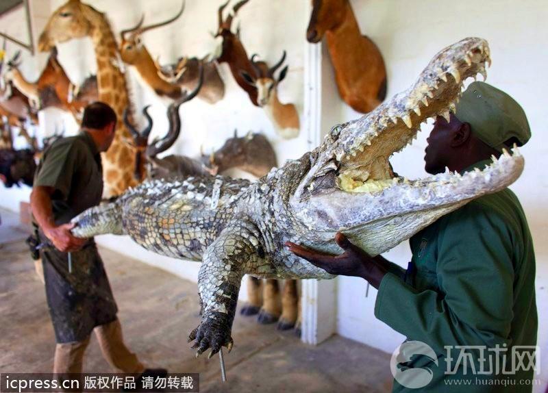 纳米比亚动物标本:残忍杀戮的永恒
