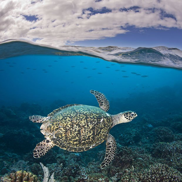全球奇妙海洋世界:天使鱼清洁翻车鲀