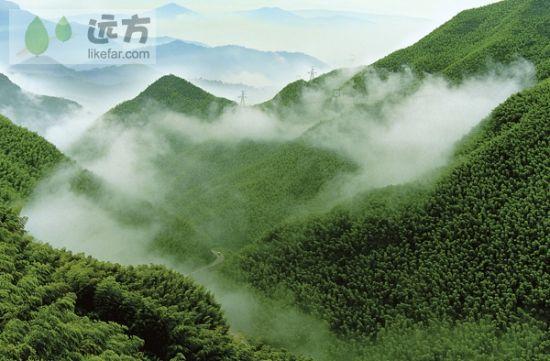 金秋步步成景 浙江安吉竹海游攻略(组图)-科教台-中国