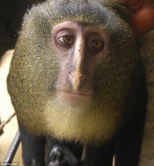 猴子最喜欢吃什么
