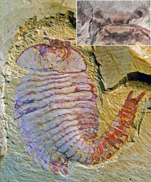2亿年前节肢动物化石提供动物大脑进化新见解-科教