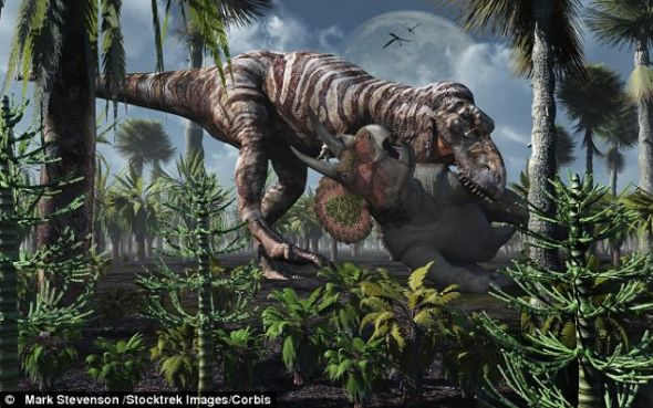 一幅模拟图,展示了霸王龙猎捕三角龙的景象。科学家的电脑模型对研究中涉及的所有动物饮食习惯进行了模拟研究