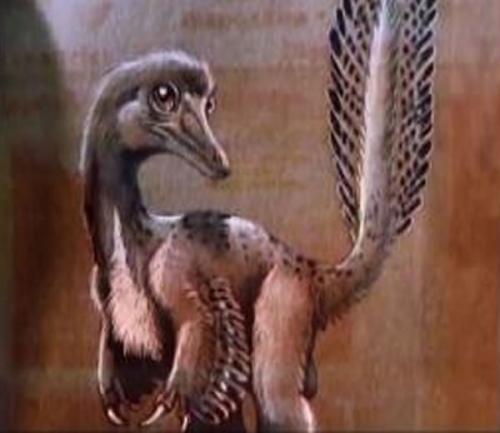 阿根廷中部内格罗河省发现恐龙新物种