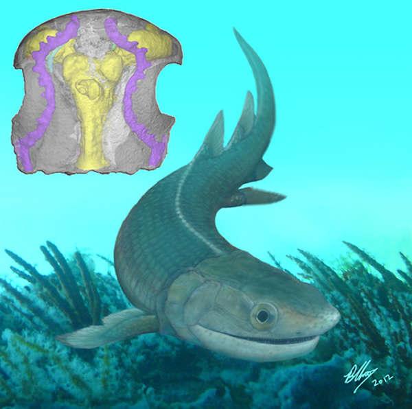 奇异东生鱼生态复原以及脑颅三维虚拟复原图(uux.cn)