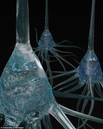 美研制微型碳纤维电极 可倾听大脑神经细胞
