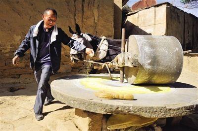 陕北榆林市绥德县亢家沟村,黄国盛老人依然选择最传统的驴子拉磨的方式磨糜子面。他觉得,这样做出的黄馍馍才最好吃。而今,他自己也成了绥德的名人。