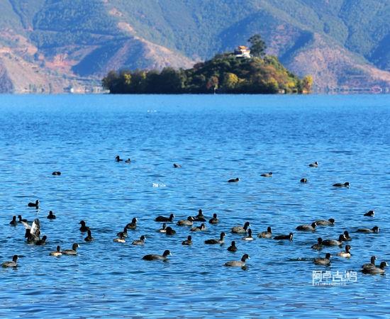 湖里的鸟群