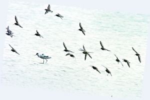 东洞庭湖是一些鹭类、鸥类的繁殖地。