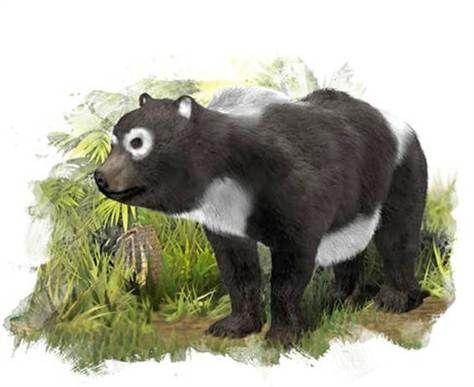 已知最古老的大熊猫祖先,生活在1160万年前的西班牙