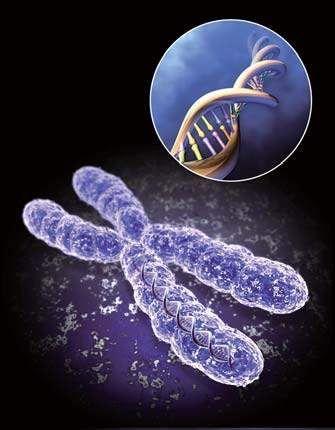科学家发现特殊基因或可预测人类死亡时间