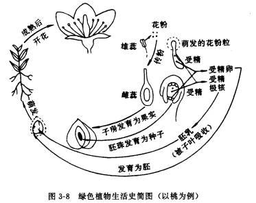 花的子房、胚珠,分别发育成了果实和种子。