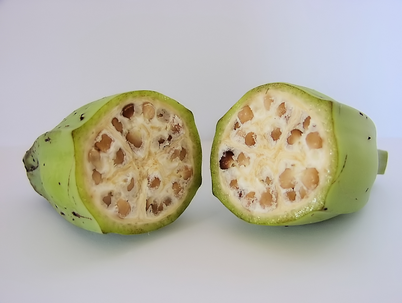 野生香蕉的种子可是非常大而坚硬的,你当然不希望在香蕉中吃到它。 /wikipedia.org