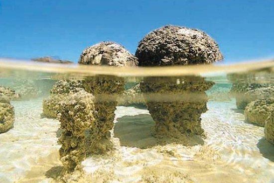 34.5亿年岩层发现地球古老微生物神秘痕迹